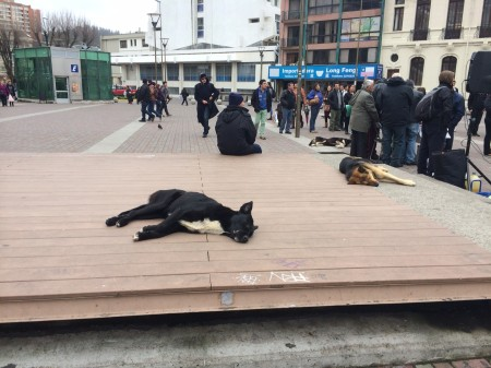 Dogs sleeping on the platform in the square