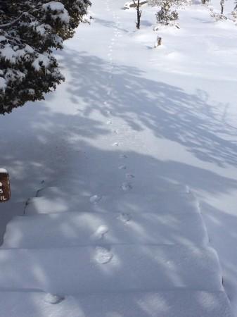Bill's footprints